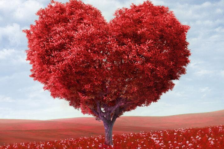 Любовь сама по себе питание
